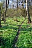 Ressort dans la forêt Photos libres de droits