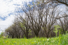 Ressort dans la forêt Images stock