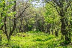 Ressort dans la forêt Images libres de droits