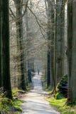 Ressort dans la forêt de hêtre Images libres de droits