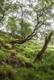 Ressort dans la forêt, Ecosse Photographie stock libre de droits