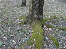 Ressort dans le jardin botanique, Zagreb, Croatie, 15 photos stock