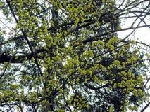 Ressort dans le jardin botanique, Zagreb, Croatie, 10 photo libre de droits