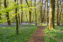 Ressort dans les bois Image libre de droits
