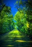 Ressort dans les bois arrières Photo libre de droits