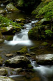 Ressort dans Tremont au parc national de Great Smoky Mountains, TN Etats-Unis Images stock