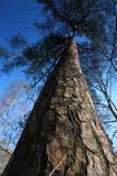 Ressort dans une forêt Photo libre de droits