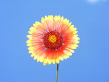 Ressort de fleur de Sun Photographie stock libre de droits