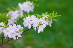 Ressort de fleurs Photo libre de droits