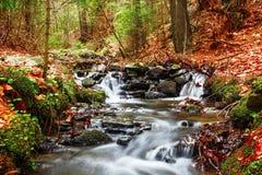 Ressort de forêt dans la transition de saisons Images libres de droits