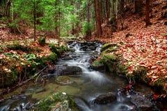 Ressort de forêt dans la transition de saisons Images stock