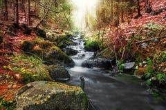 Ressort de forêt dans la transition de saisons Photos libres de droits