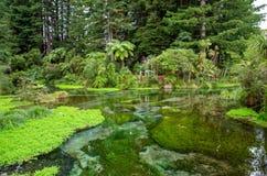 Ressort de Hamurana dans Rotorua, Nouvelle-Zélande Photo libre de droits