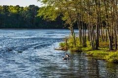 Ressort de Margaruite de lac Photographie stock