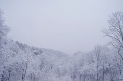 ressort de neige photo libre de droits