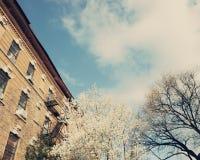 Ressort de New York City Image libre de droits