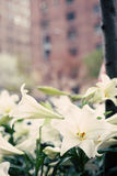 Ressort de New York City Images stock