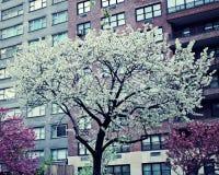 Ressort de New York City Photo stock