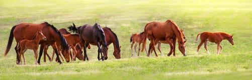 Ressort de troupeau de cheval Photos libres de droits