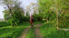 Ressort, dehors, cavalier de fille, équitation de jockey sur le bel étalon brun de pur sang, par la vieille pomme de floraison banque de vidéos