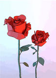 Ressort des roses sur un blanc Image libre de droits