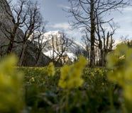 Ressort du Tirol de pré Photographie stock libre de droits