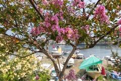Ressort en Amasra et nouvelles fleurs de floraison color?es photographie stock libre de droits