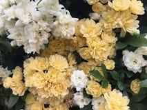 Ressort en fleur Photographie stock
