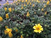 Ressort en fleur Images stock