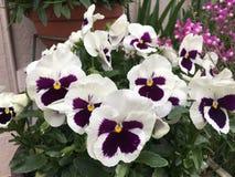 Ressort en fleur Image libre de droits
