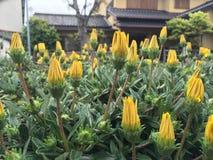 Ressort en fleur Image stock