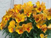Ressort en fleur Photo stock