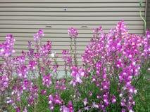 Ressort en fleur Photos libres de droits