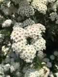 Ressort en fleur Photo libre de droits