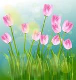 Ressort et fleurs Photos libres de droits
