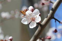 Ressort et fleurs Images stock