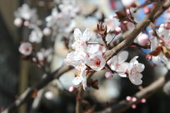 Ressort et fleurs Photo stock