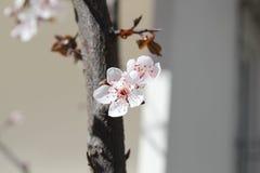 Ressort et fleurs Photographie stock