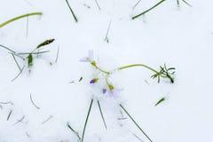 Ressort et neige Images libres de droits