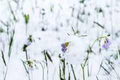 Ressort et neige Image libre de droits