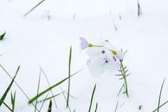 Ressort et neige Photographie stock libre de droits