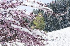 Ressort et neige Photo libre de droits