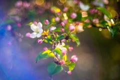 ressort fleurissant dans la forêt image stock