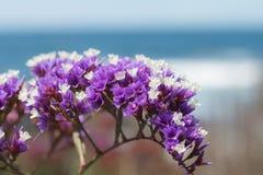 Ressort fleurissant par la mer photographie stock libre de droits