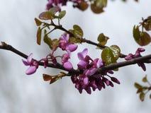 Ressort - fleurs sur le buisson Photographie stock