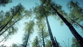 Ressort Forrest Fresh Green Woods dans la forêt de Kursk clips vidéos