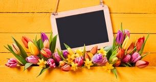 Ressort ou bannière jaune lumineux de Pâques avec des tulipes image stock