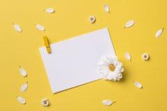 Ressort ou fond d'été avec l'espace de copie pour le texte Photos libres de droits