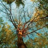 Ressort par un arbre coloré images libres de droits