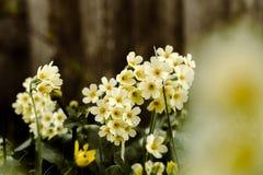 Ressort réveillant des fleurs Image libre de droits
